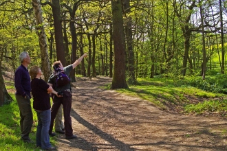 Stoneycliffe Wood bird walk