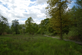Photo of Askham Bog