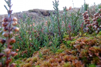 Mosses growing on peatland