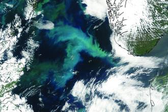 Nasa Earth Observatory image of a phytoplankton bloom in the North Sea