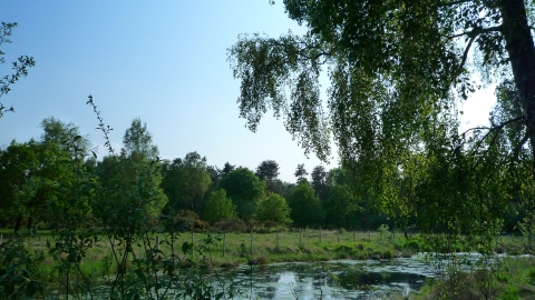 Allerthorpe Common - Kirsty Brown