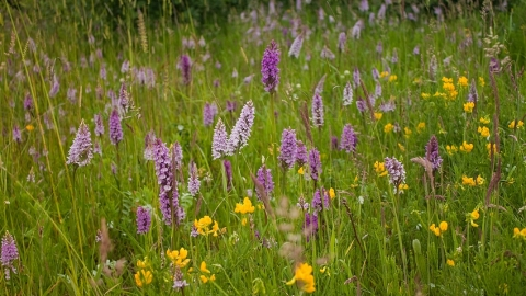 Orchids at Ledston Luck