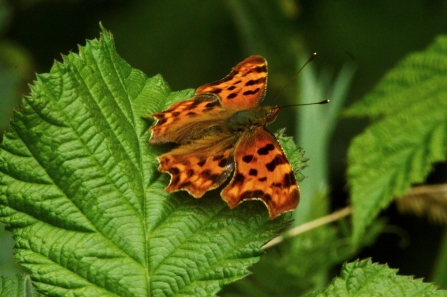 Comma © Matthew Christou