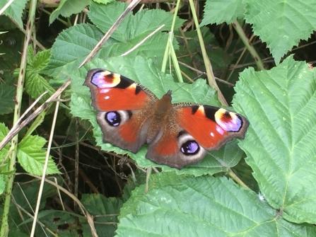 Potteric Carr wildlife sightings   Yorkshire Wildlife Trust