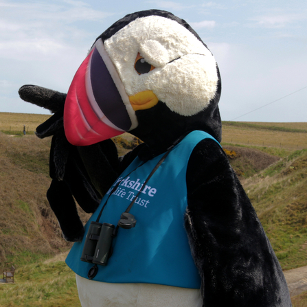 Our puffin mascot, Cliff doing a spot of bird watching at Flamborough's North Landing