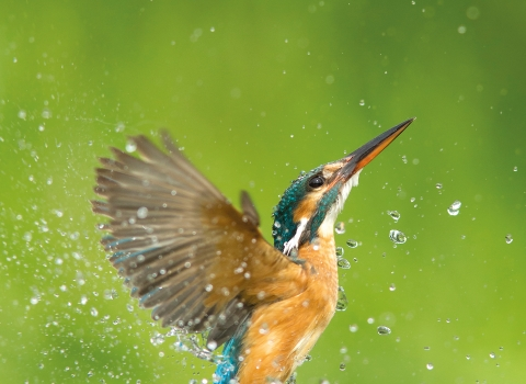 Kingfisher - Jamie Hall