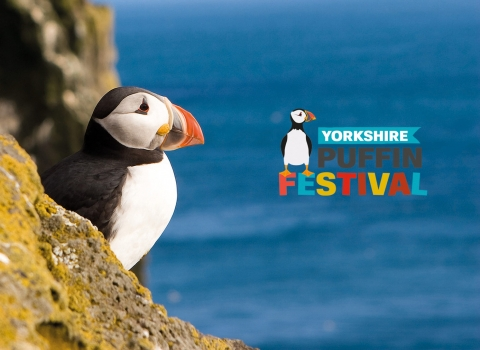 Yorkshire puffin with logo