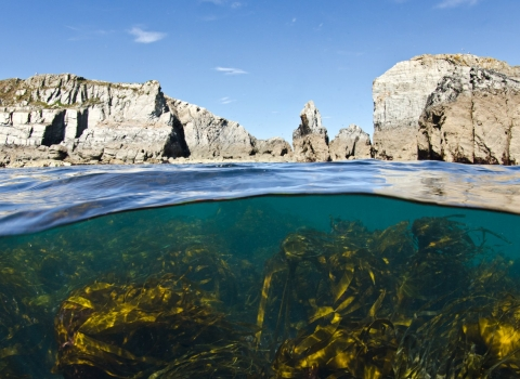 Kelp And Cliffs, Lundy Island, UK